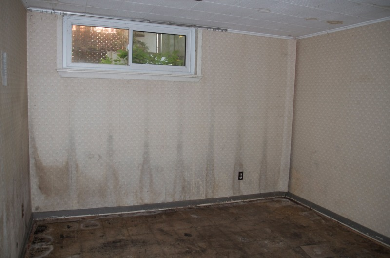 Mold on Walls